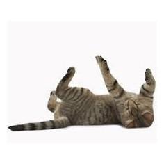 Hierba Catnip Seca para Gatos - 100% Organica - Pote 28g